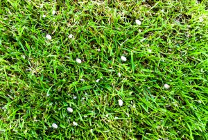 fertilizer pellets in grass