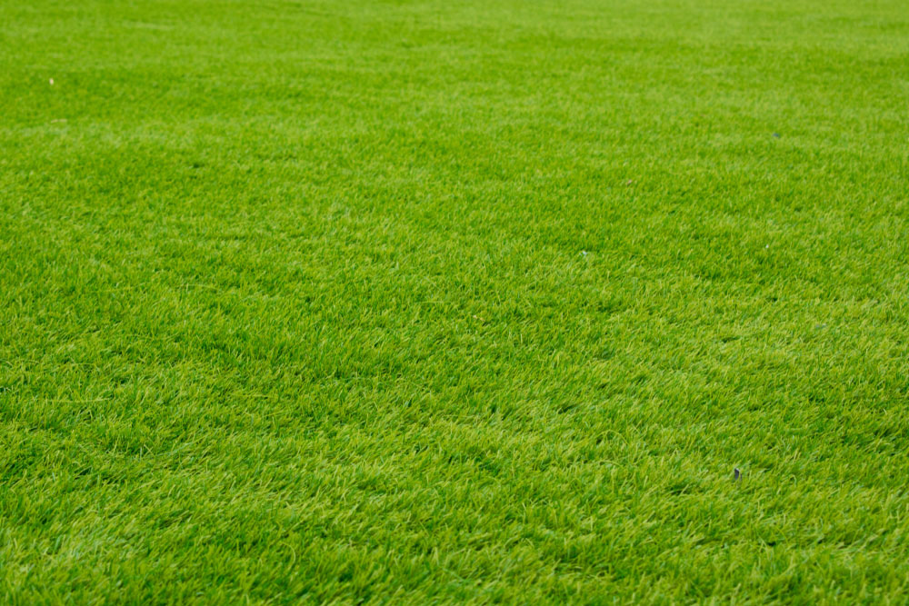What You Can Do to Help Your Grass