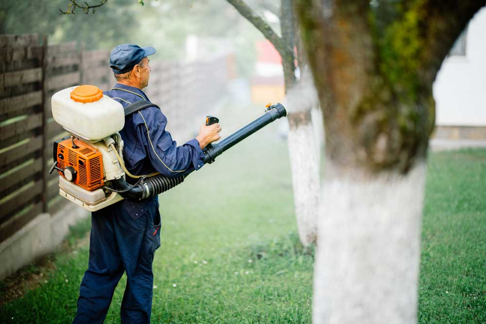 spraying a yard for mosquitoes
