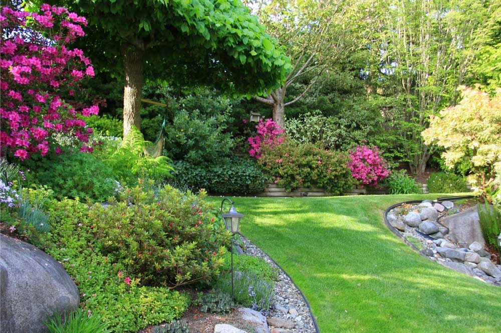 healthy trees and shrubs