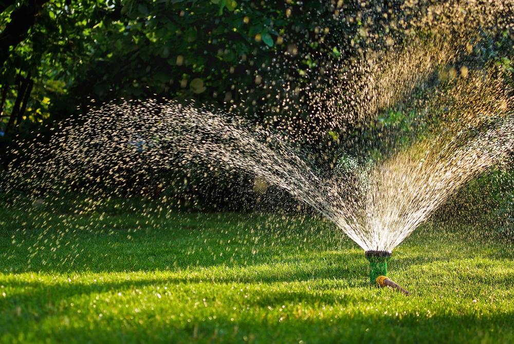 When To Water Bermudagrass