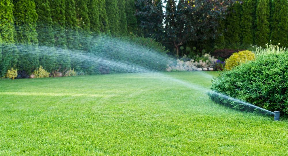 sprinklers watering a lawn