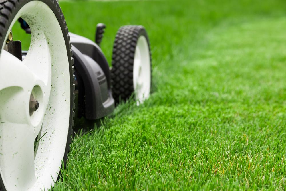 a lawnmower cutting grass